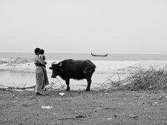 Büffel am Meer
