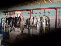 buena pesca..mejillones antofagasta chile