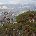 Buena vista 7 Picos