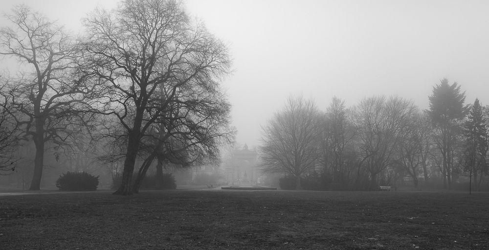 Bürgerpark im Nebel