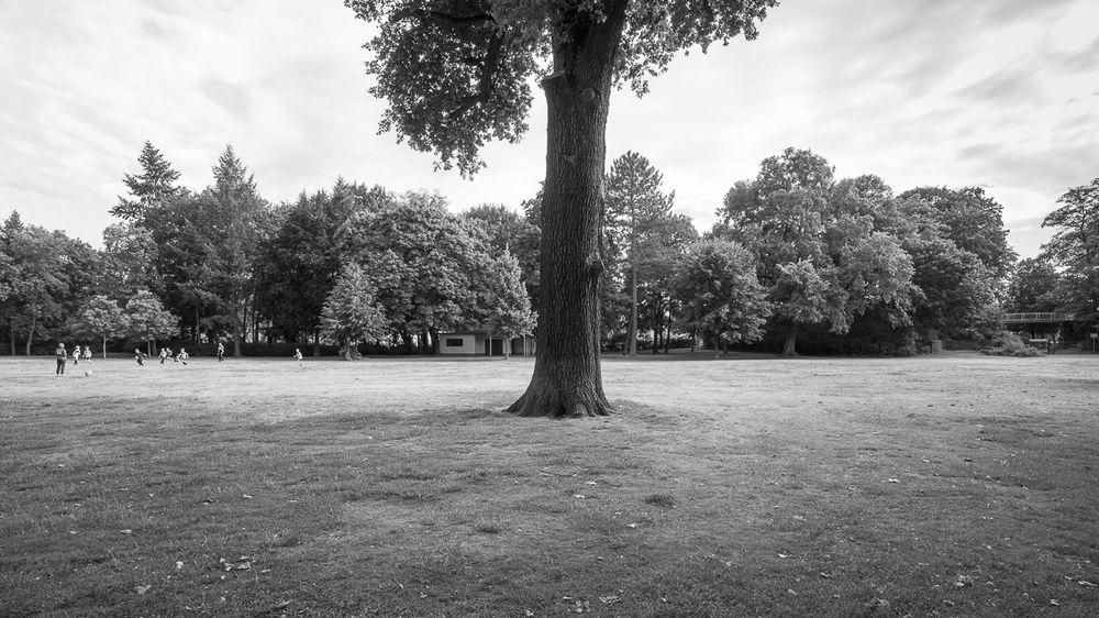 Bürgerpark Pankow II