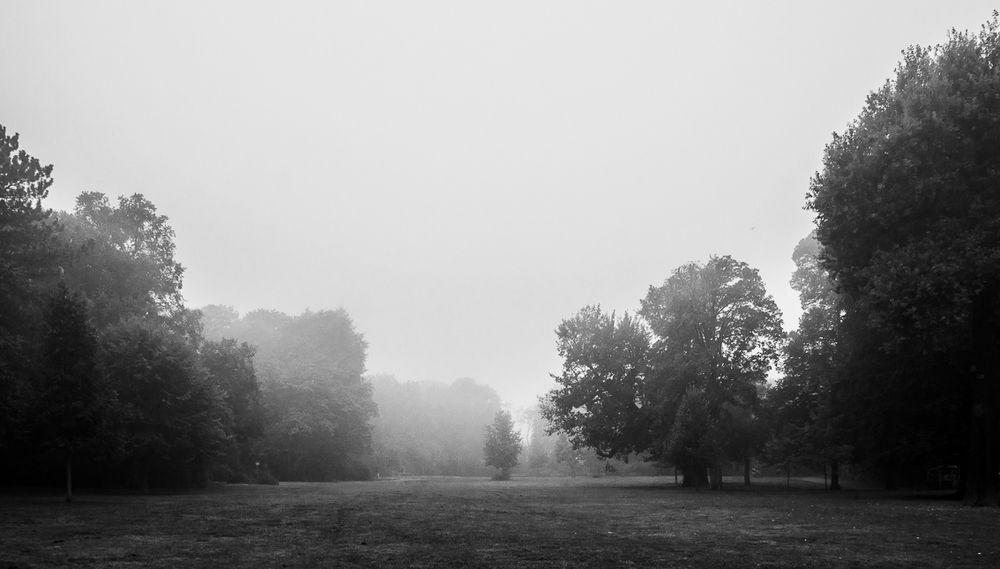 Bürgerpark Pankow im morgendlichen Nebel