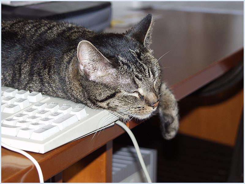 Büroarbeit macht ja sooooooooooooo müde.