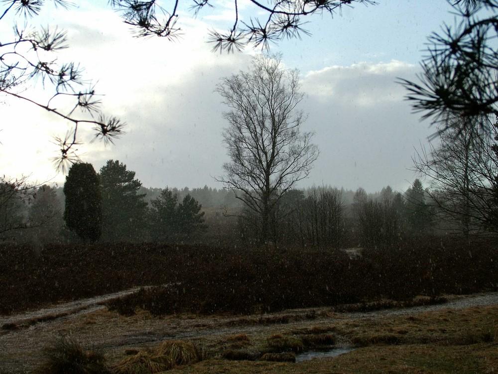 Büsenbachtal nach dem großen Regen...