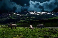 Buffalo bei Nacht                               DSC_4919-3