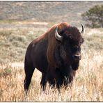 Buffalo Soldier (I)