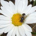 bug's life 2