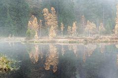 Buhlbachsee Nebel
