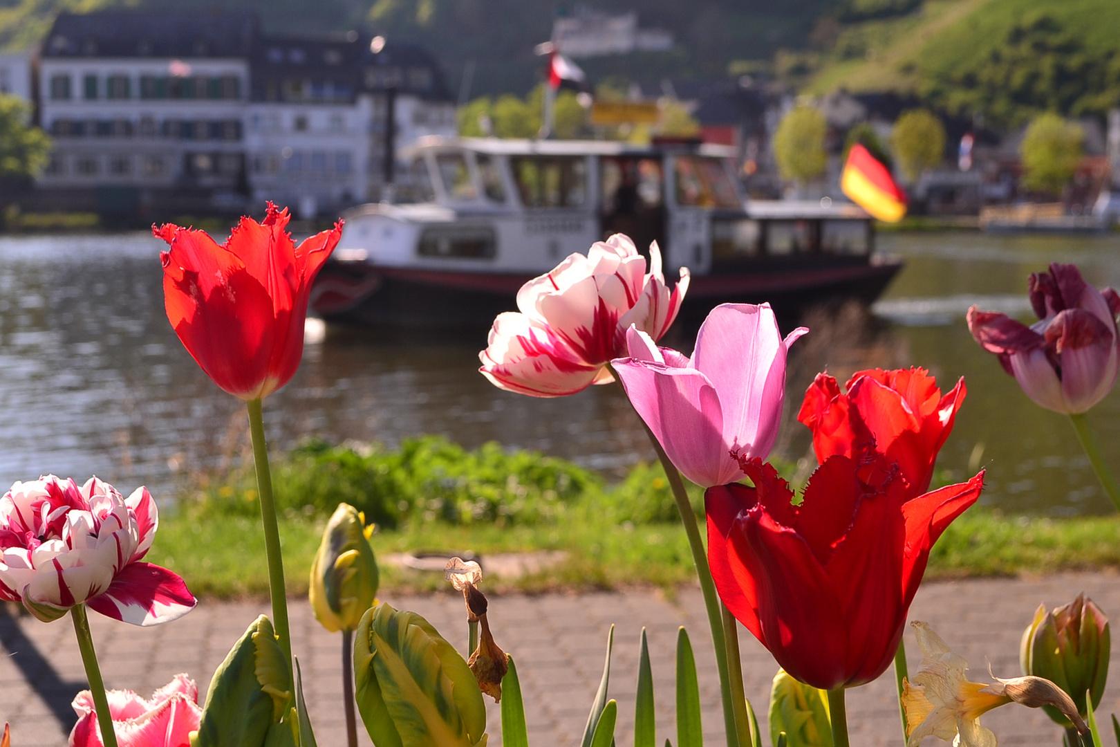 Verschiedene Blumen Mai Dekoration Von Bullay 2016