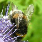 Bumble-bee :))