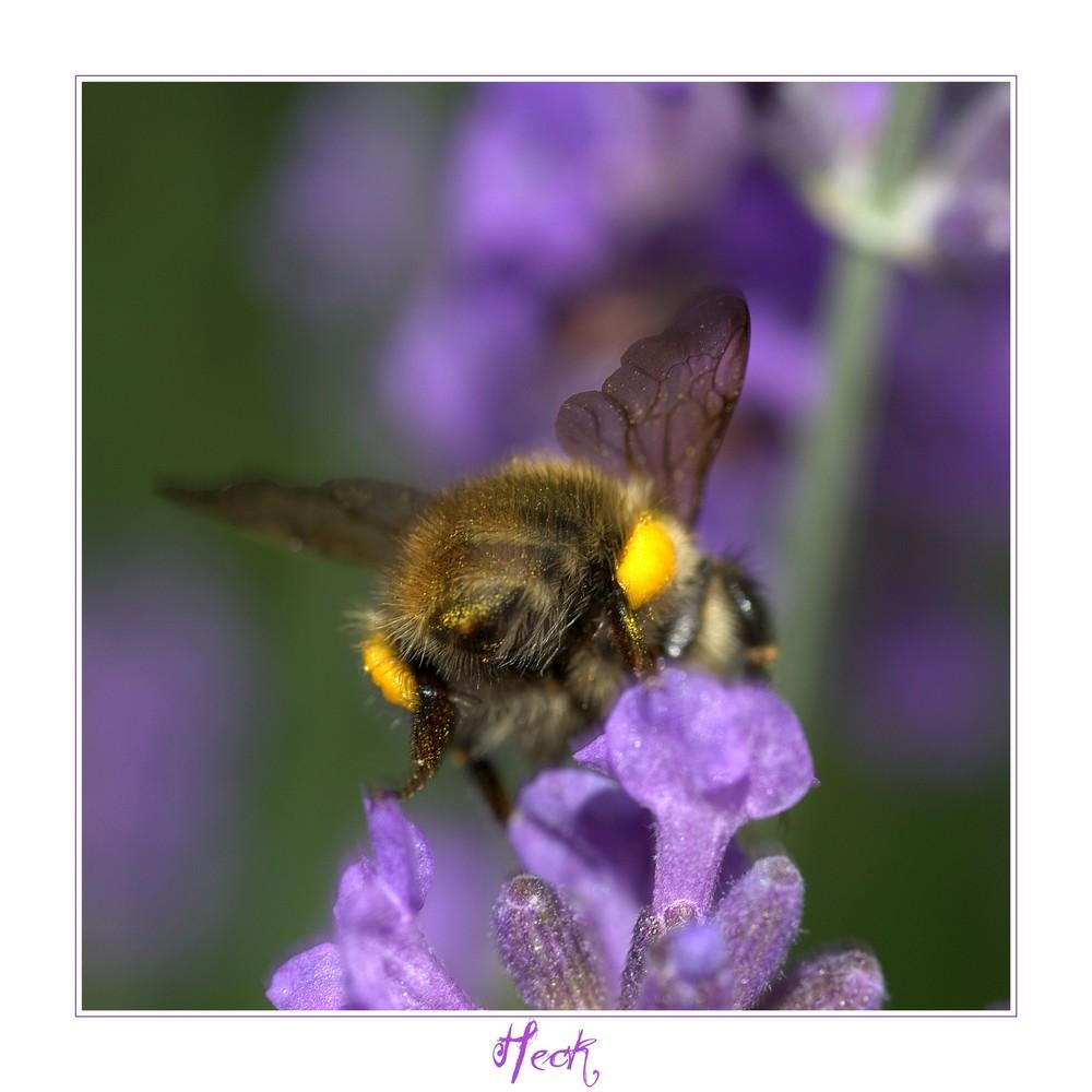 Bumblebee (3)