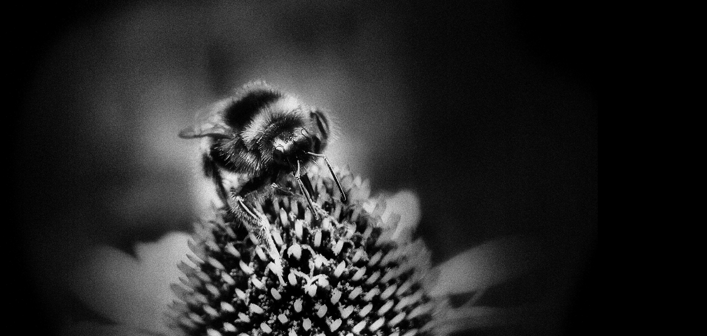 ... bumblebee on flower