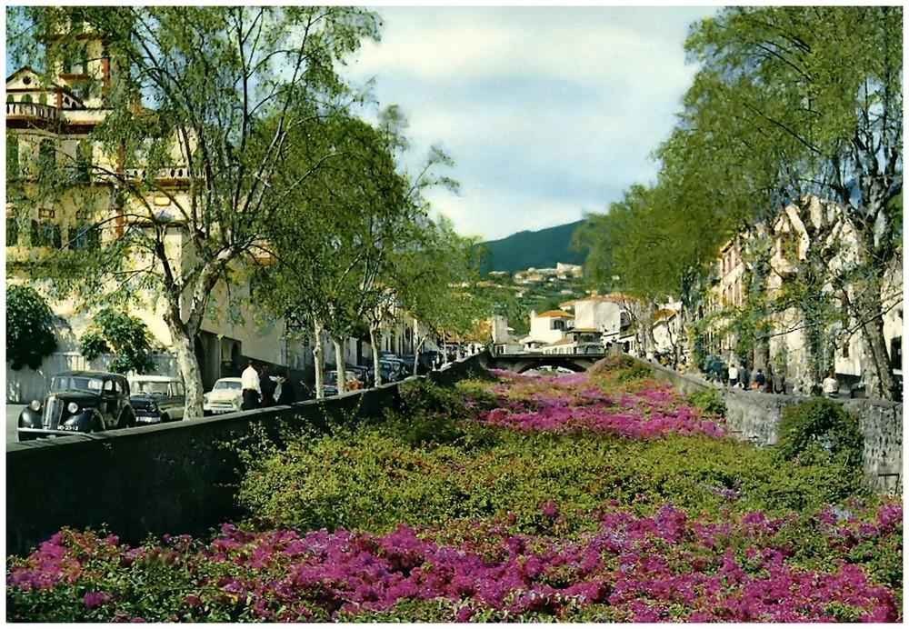 Bunganvilia covering Sta. Luzia river.