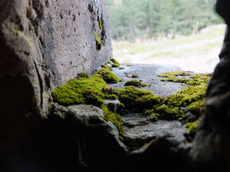 Bunker auf den Lingekopf ( im Munstertal bei Colmar )