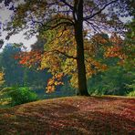 Bunt sind schon die Wälder ..................