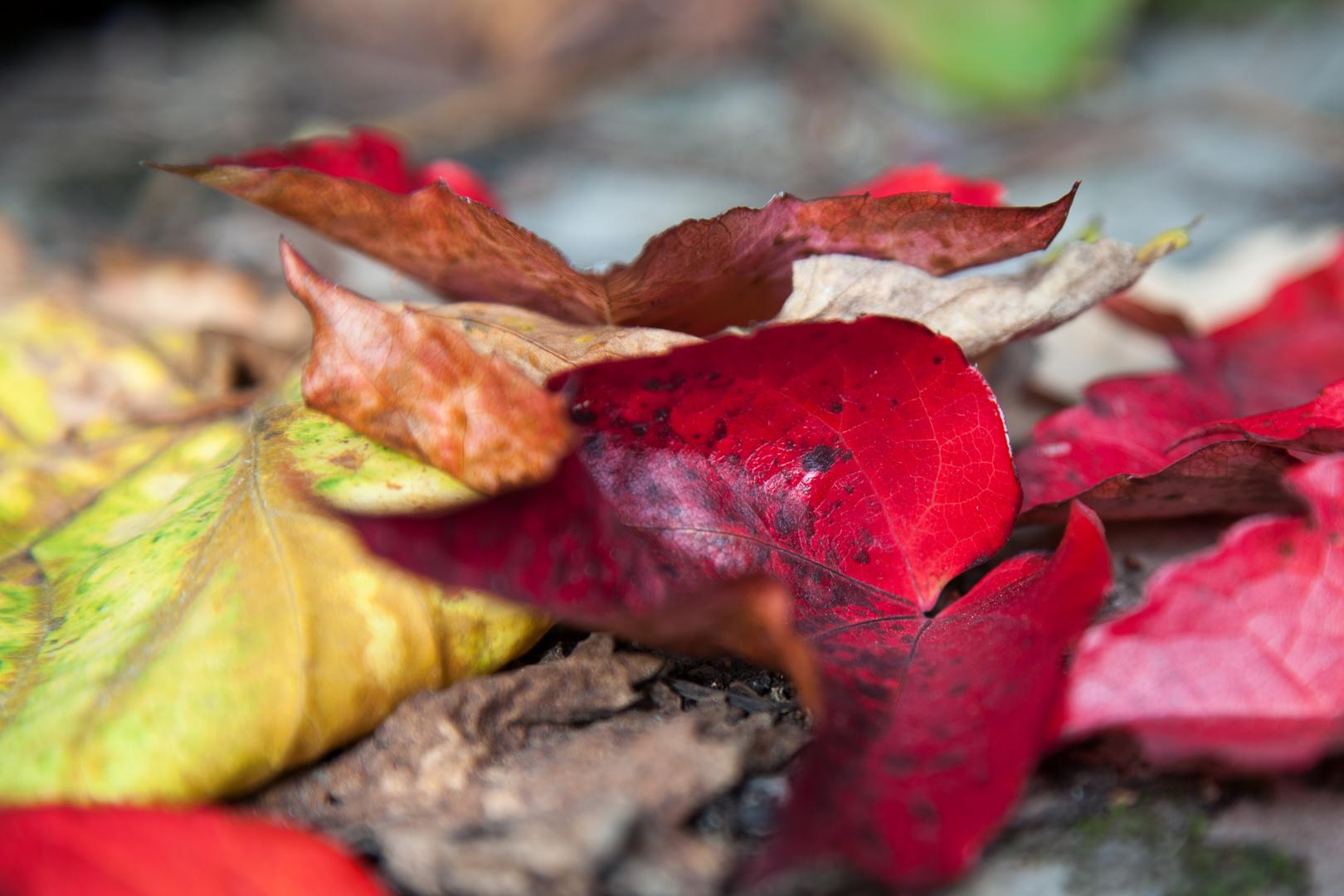 Bunte Blätter 2