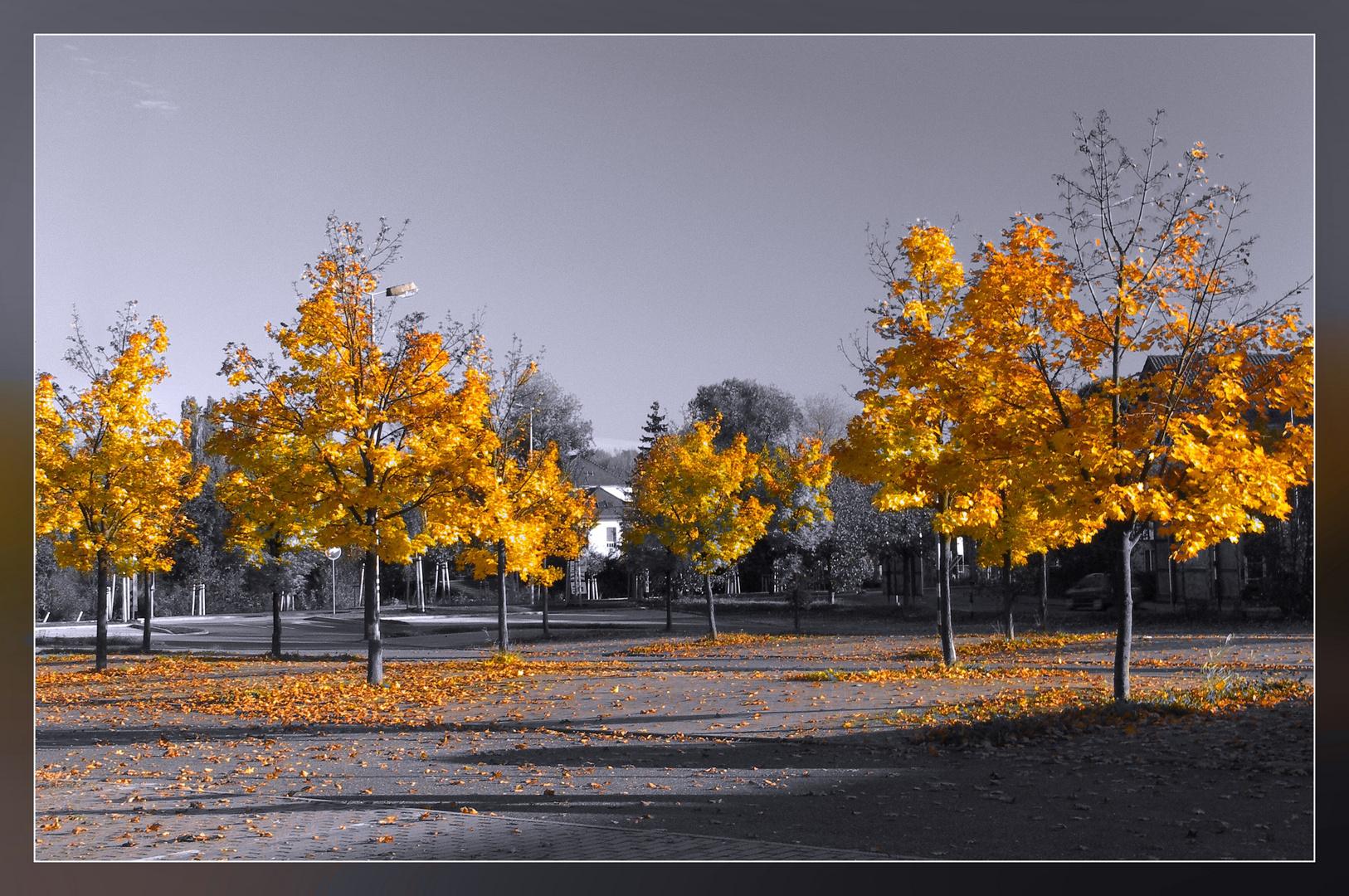 Bunte Blätter...
