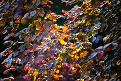 Bunte Blätter bringt der Herbst
