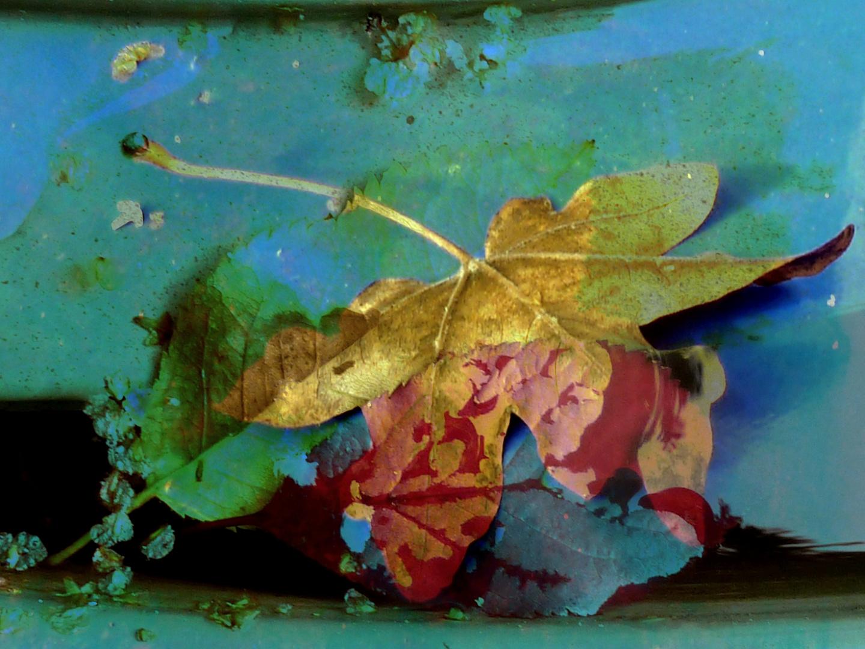 bunte Blätter fallen