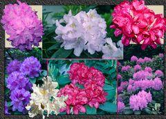 bunte Frühlingsvielfalt gerahmt