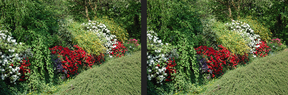 bunte hecke in hohensyburg foto bild stereoskopische raumbilder kreuzblick stereos spezial. Black Bedroom Furniture Sets. Home Design Ideas