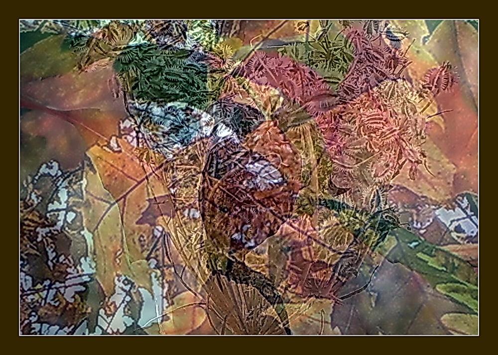 bunte Herbst Träume