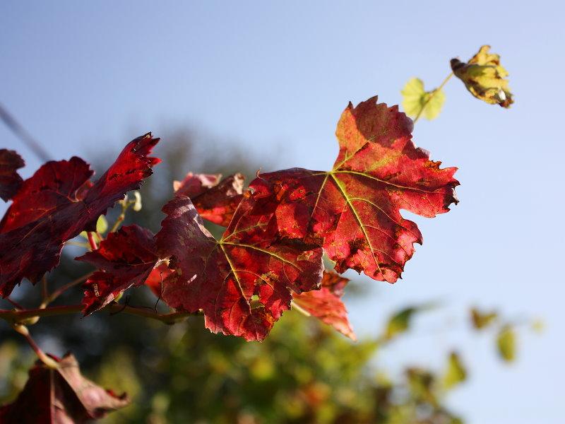 Bunte Herbstimpressionen