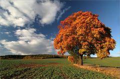 Bunte Herbsttage