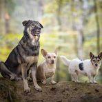 ... bunte Hunde ...