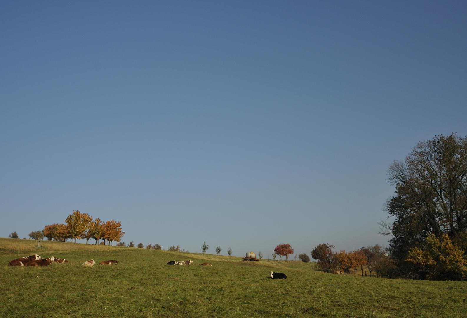 Bunte Rinder auf farbenfroher Weide