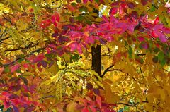 Bunter-Herbst