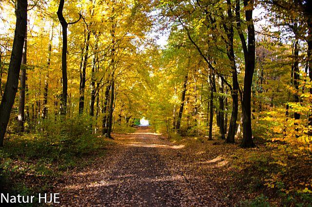 Bunter Herbst