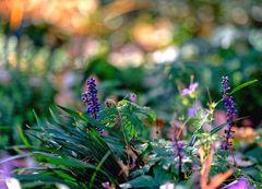 ... bunter Herbst ...