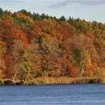 Bunter Herbst an der Elbe