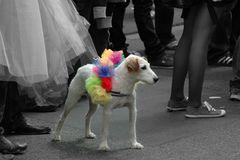 Bunter Hund :-)