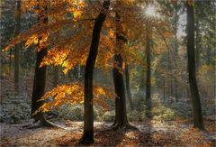 bunter November