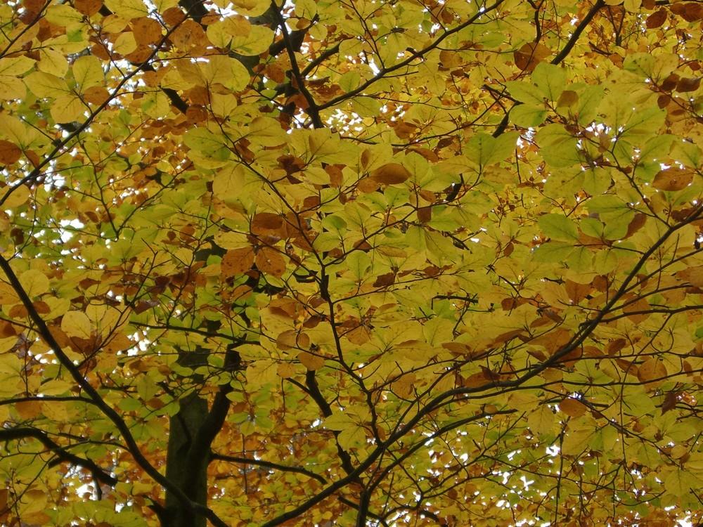 buntes Blätterdach im Herbst
