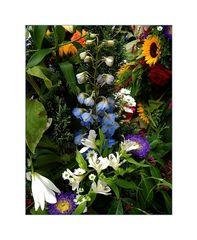 *Buntes Blüten-Allerlei*