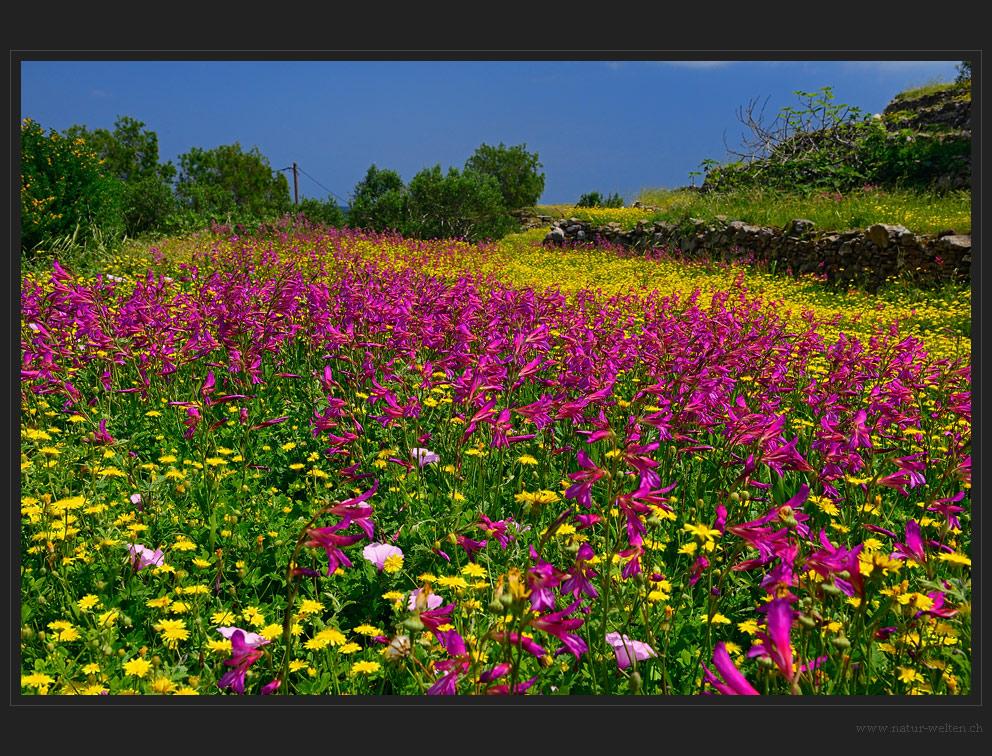 Buntes Blütenmeer