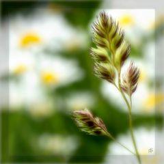 buntes Gras