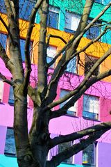 Buntes Haus Stgt Baum S-09col-c750 +5Fotos