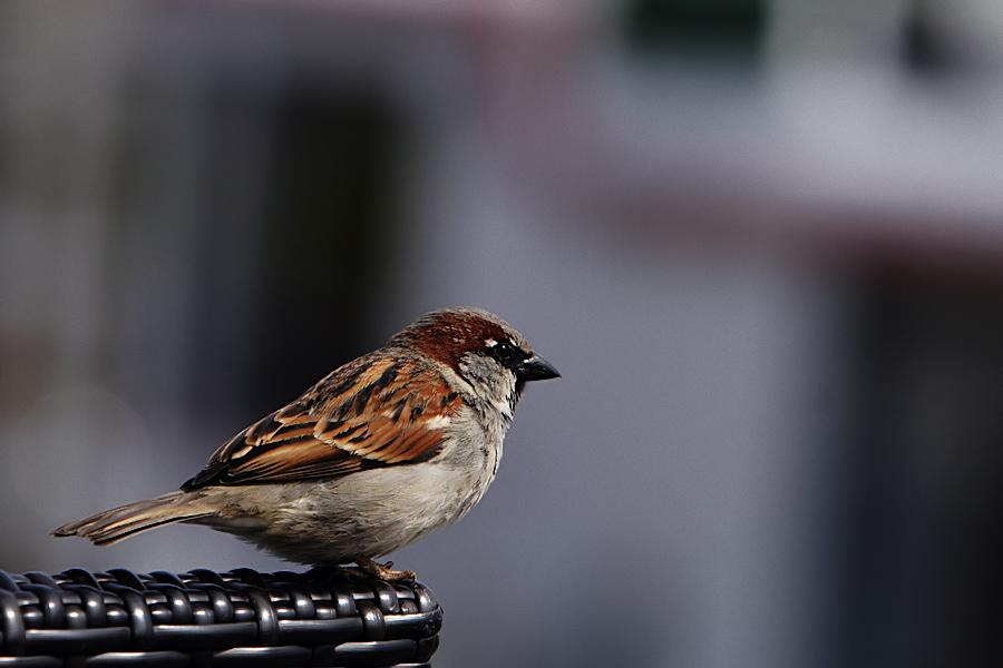 buntes vögelchen für die galerie wird aber nicht genommen weil zu viel anspruch