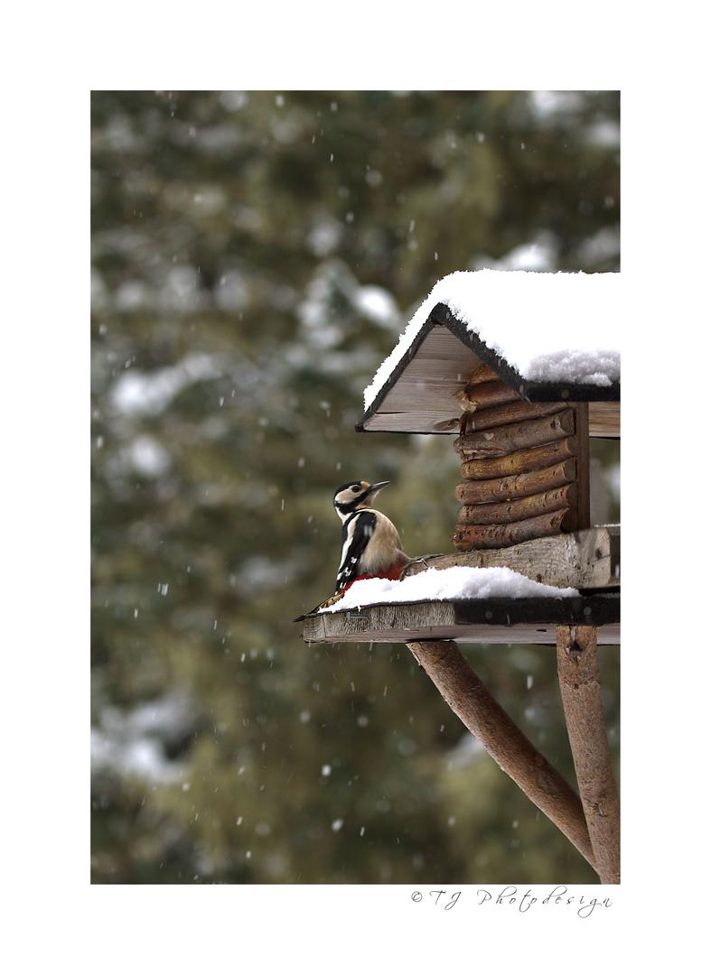 Buntspecht im Schneefall