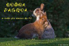 Buona Pasqua a tutti gli amici di FC