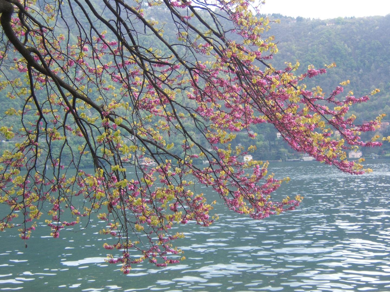 Buona Pasqua dal Lago di Como