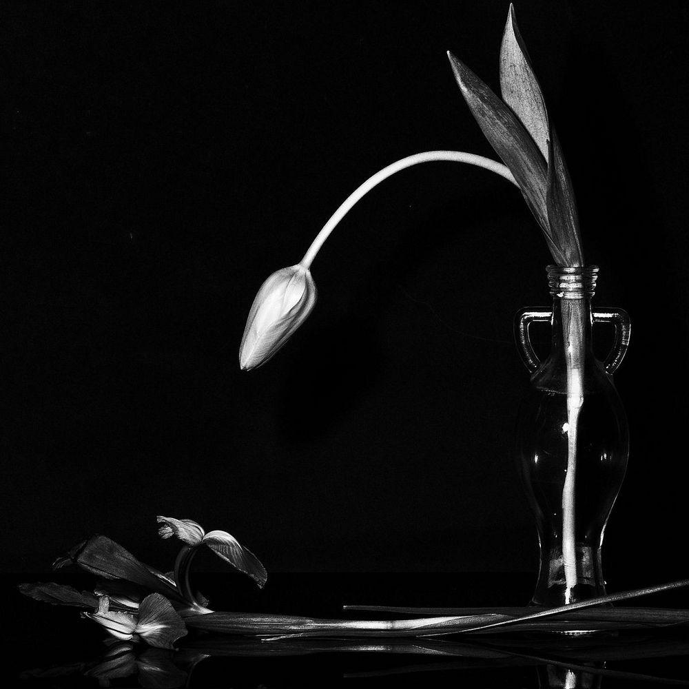 Buonanotte Amore Mio Foto Immagini Still Life Dettagli E