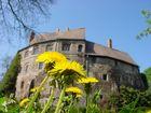 Burg Roßlau mit Löwenzahn