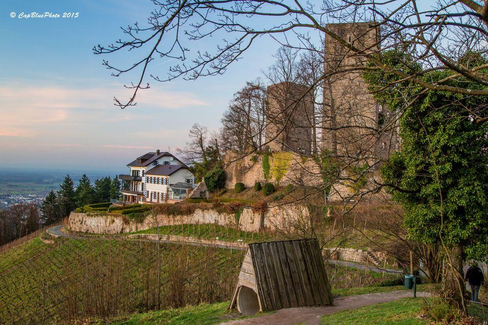 Burg Windeck mit Rebstöcken