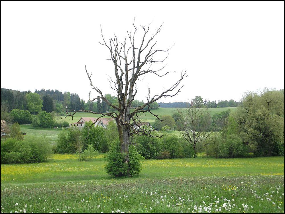 Burgelitz