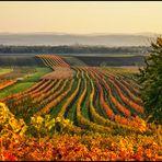 burgenländischer Herbst